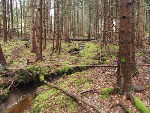 SÖ E54 Skogen