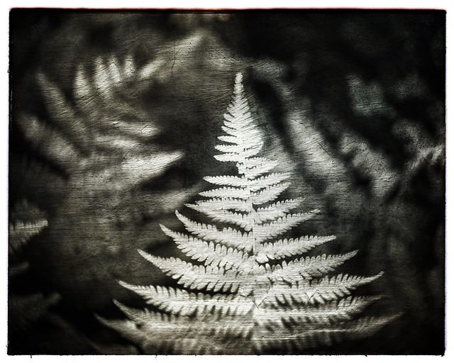 In the glade of the ghost ferns