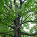 Tree-19936