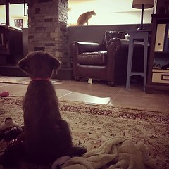 Can't we be friends? #puppylove #catproblems