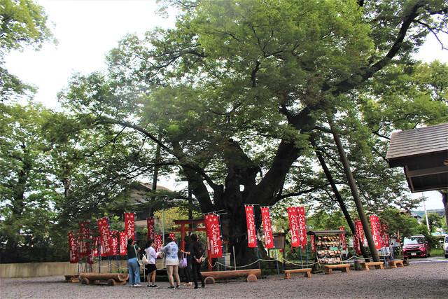 chichibuimamiya-kami011