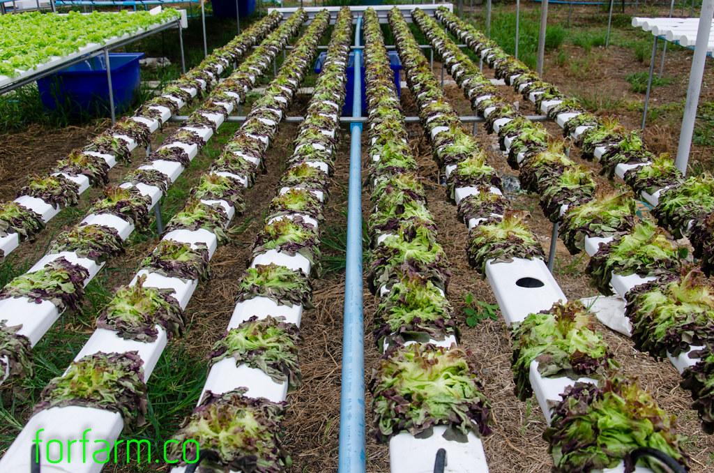 ถังน้ำ สำหรับใช้ปลูกผักไฮโดรโปนิกส์