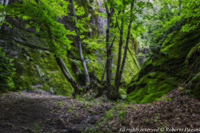 Green woodscape