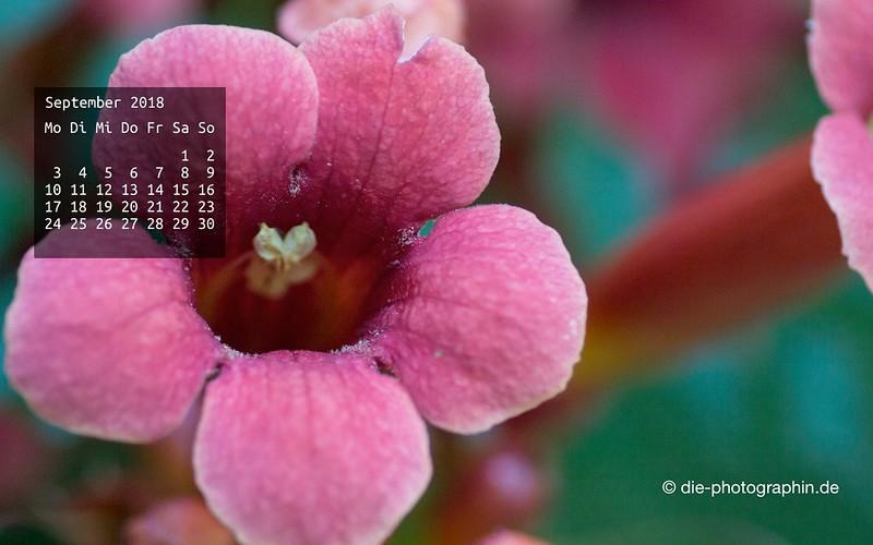 092018-blume-wallpaperliebe-diephotographin