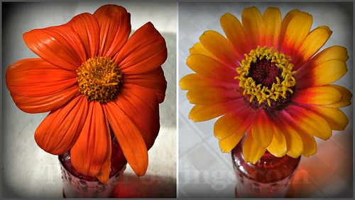 tithonia & zinnia