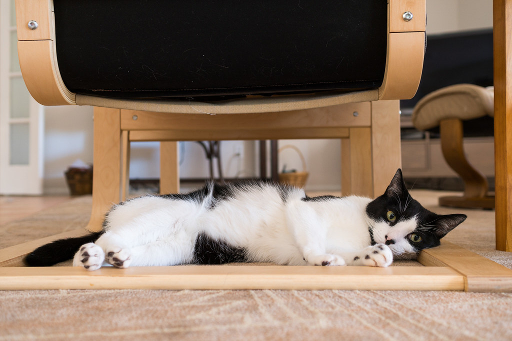 Our cat Boo relaxes under a chair
