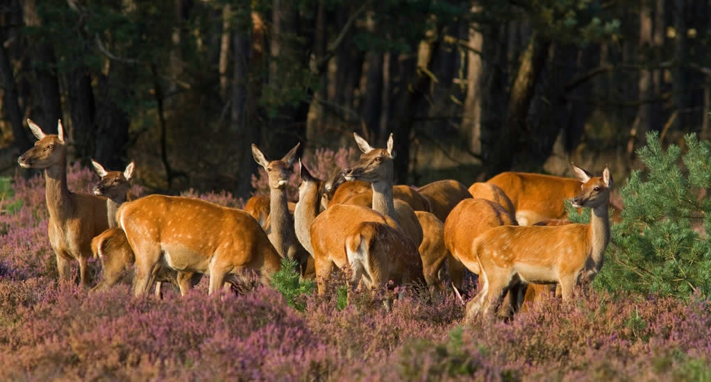 Autumn in The Netherlands: visit Veluwe National Park | Your Dutch Guide