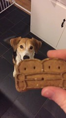 couch cookie