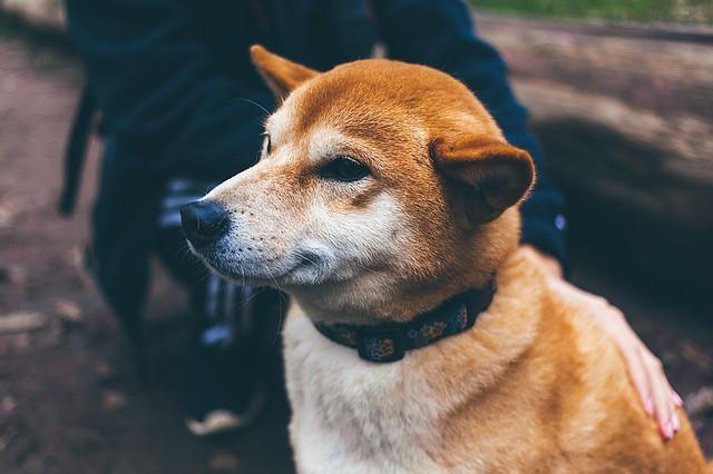 災害への準備として色々な音に慣れる練習をしている犬