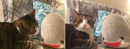 Amelia with Plush Shark