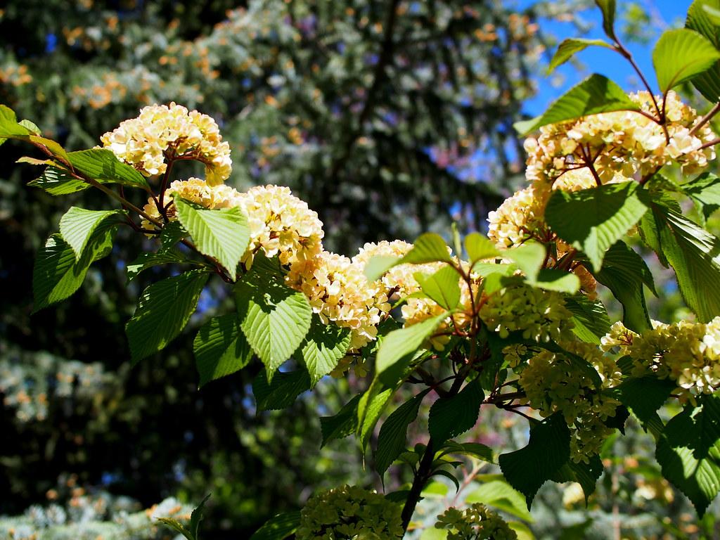 Red Butte Garden Emoke Debreczeni Flickr
