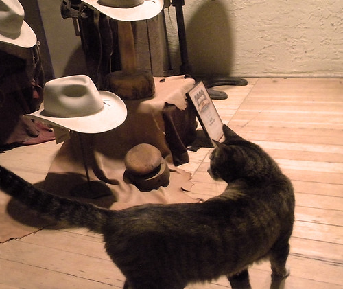Cat in a Hat Store, Mancos, Colorado
