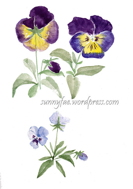 watercolour sketch of pansies