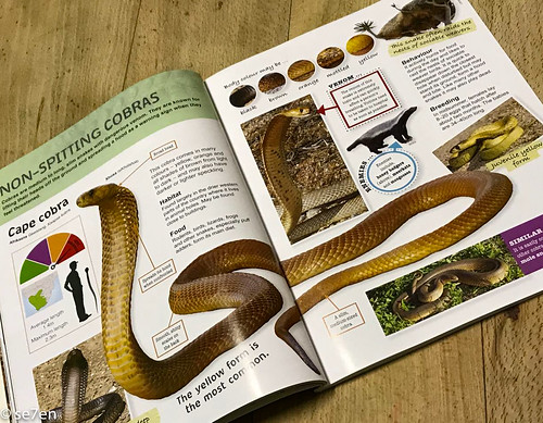 se7en-17-Sep-18-Cape Cobra Kids' Snakes