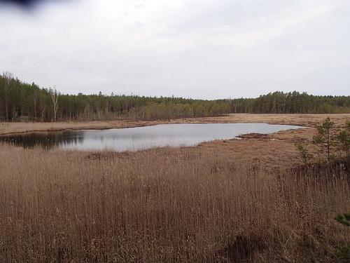 SÖ E17 Aborrsjön2