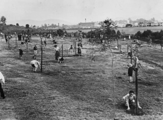 Migrant children planting trees at Ballymore Park in Herston Queensland 1953