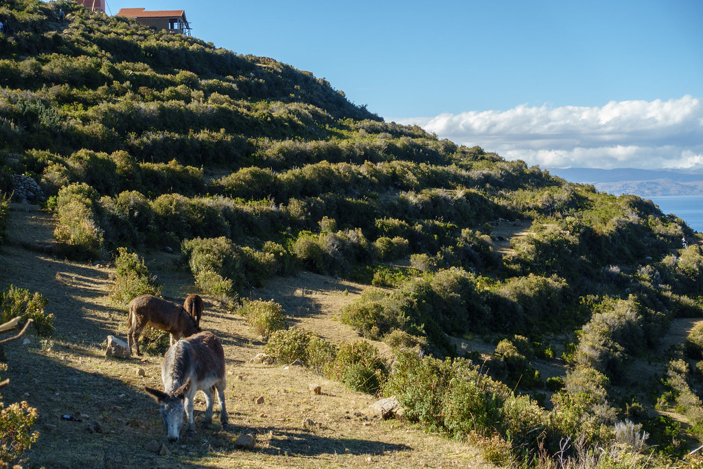 Lake Titicaca-05975
