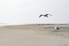gulls on a foggy beach