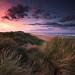 Dune Walk by Stu Patterson