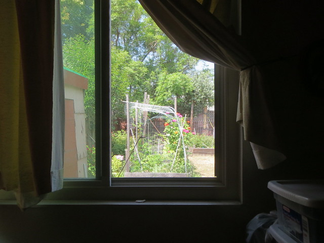 garden through window, Canon POWERSHOT ELPH 520 HS