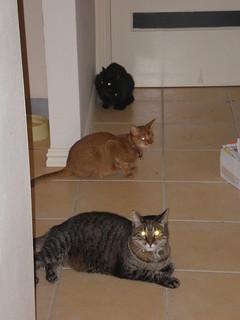 Dim Sim, Sahara, and Gizmo