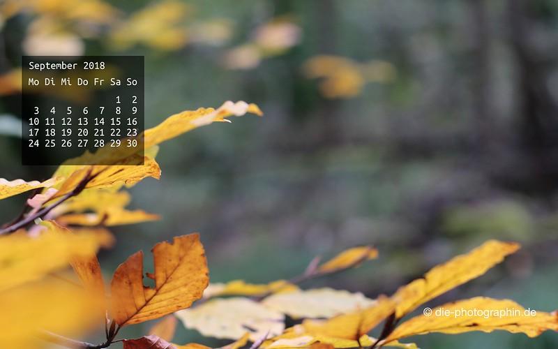092018-gelbesLaub-wallpaperliebe-diephotographin