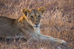 Galana Conservancy