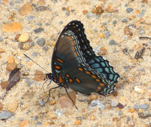 swamp wildlife mississippi nature butterfly