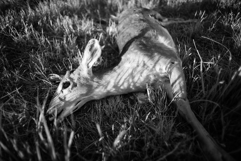 _FSC4442 (bambi)
