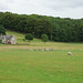 Doune Park Farm