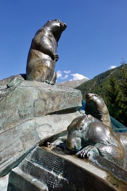 Marmots frolicking