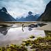Milford Sound NZ 2 by Wisconsin Fox