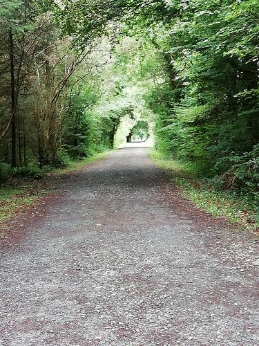 Forêt de Cong
