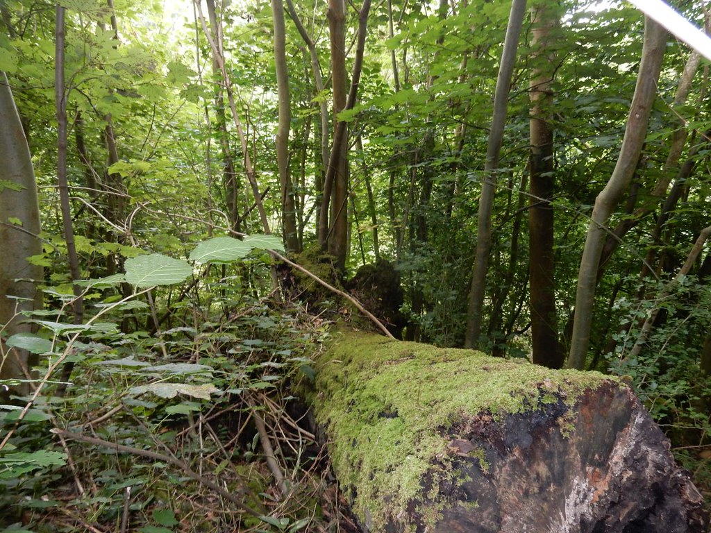 Mossy log Tadworth via Headley Heath Circular
