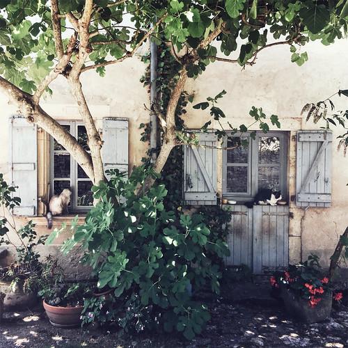 Road-trip en France - Prendre l'ombre à Bruniquel