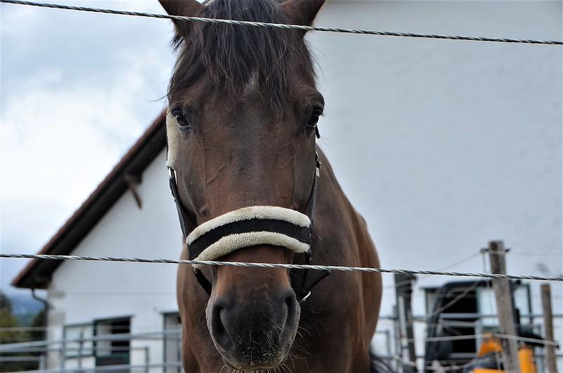 Horse 31.08 (10)