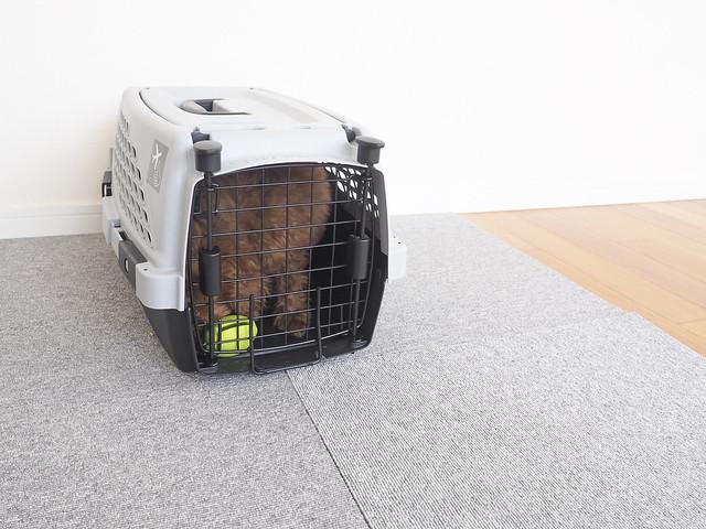 避難に役立つクレートトレーニングができている犬