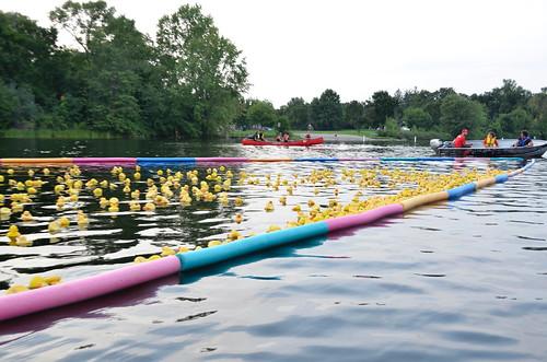 Carleton Place - Duck Derby ducks