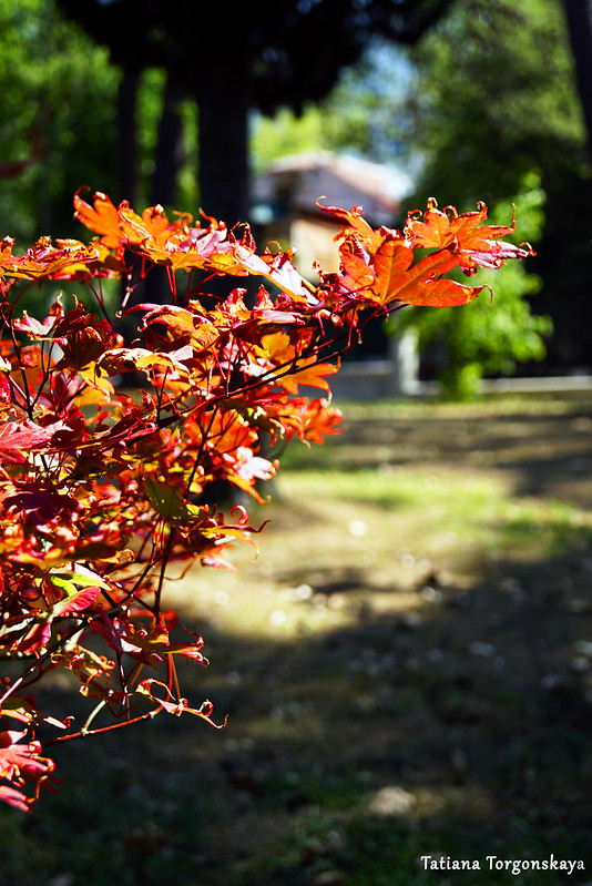 Ветка дерева с красными листьями