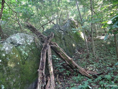 Bear's Den Overlook 12