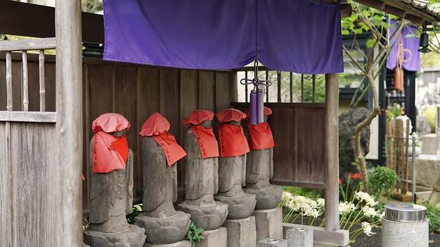 常泉寺(花寺)DSC00657-01