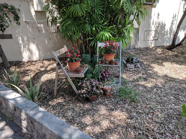 Plants of Rockhaven Sanitarium