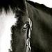Facing the Horse
