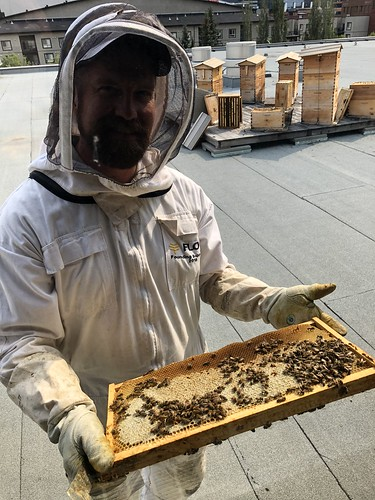 MacEwan Urban Beekeeping Tour