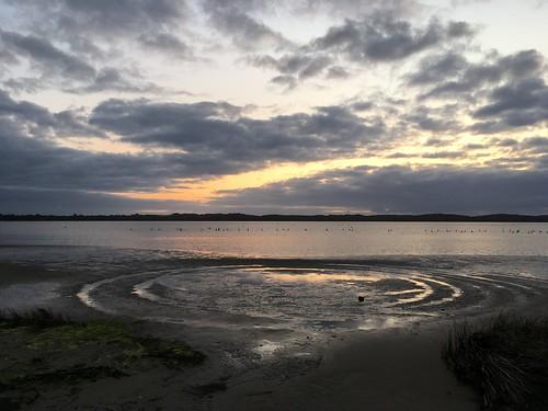 Estuary Swans at Sunset