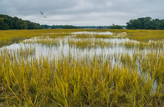 Marshlands Conservancy
