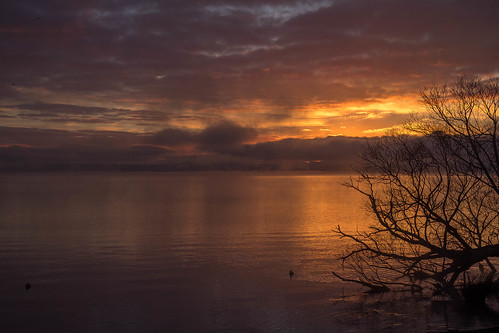 sunrise mist lakerotorua rotorua newzealand nz northisland 50mm 50mmlens fujifilmxt2 fujiphotography goodlight morninglight morning