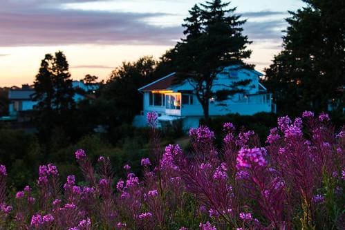 eva haugesund norway sunset flowers