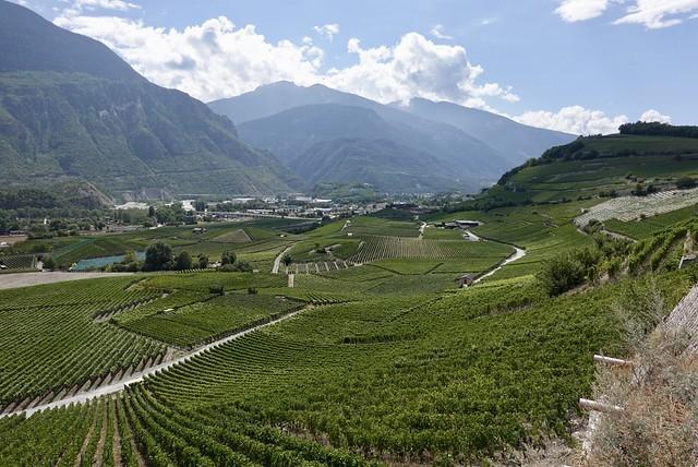 Tidy vineyards