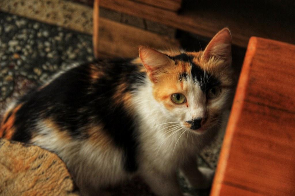 Resident cat, Sun Guesthouse, Kutaisi
